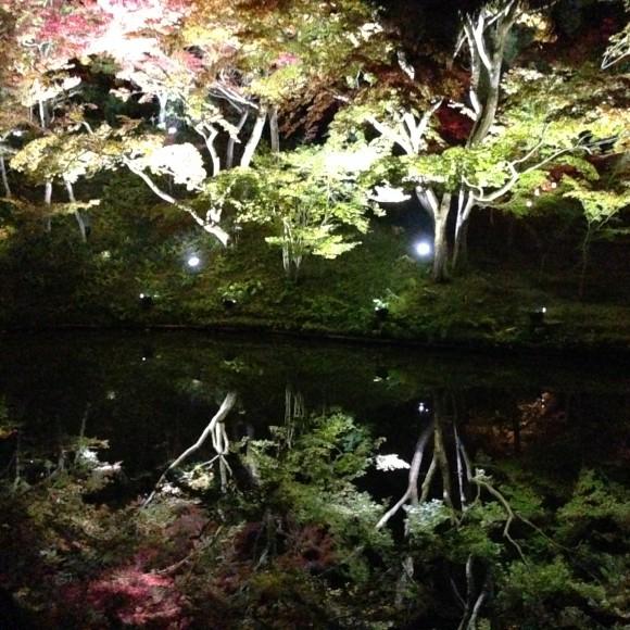 高台寺-臥龍池-紅葉