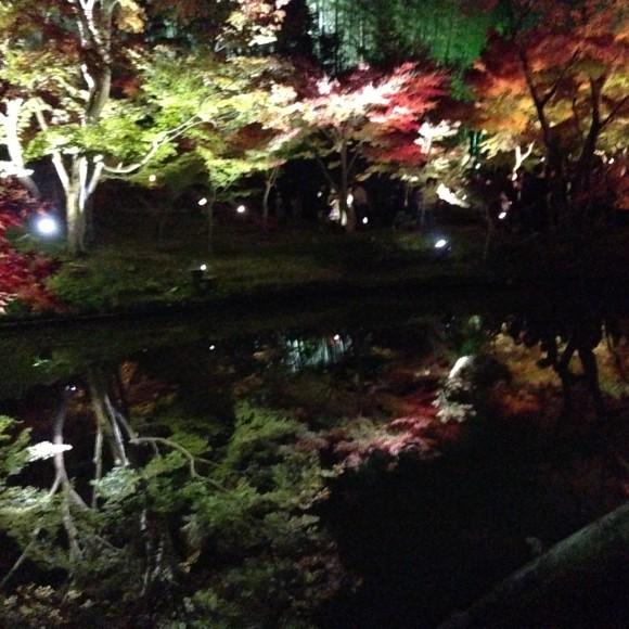 臥龍池の紅葉ライトアップ