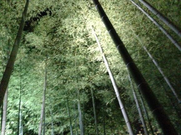 竹林ライトアップ頂上