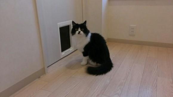 猫のシェアハウス